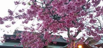 <福岡 観光>パワースポット 櫛田神社
